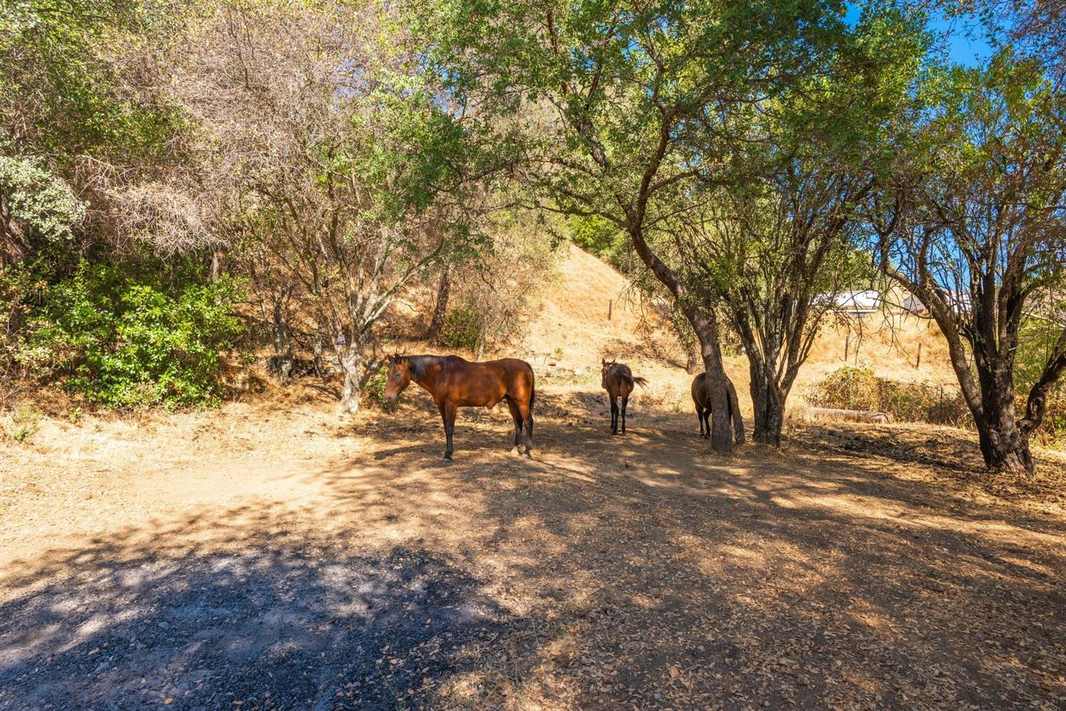 Amazing property with so much potential! 2.9 acres of usable and level land. Beautiful views from different locations of the property. Walking distance to Main Street, where you can shop, dine and wine taste! Private location with all of the conveniences close by.