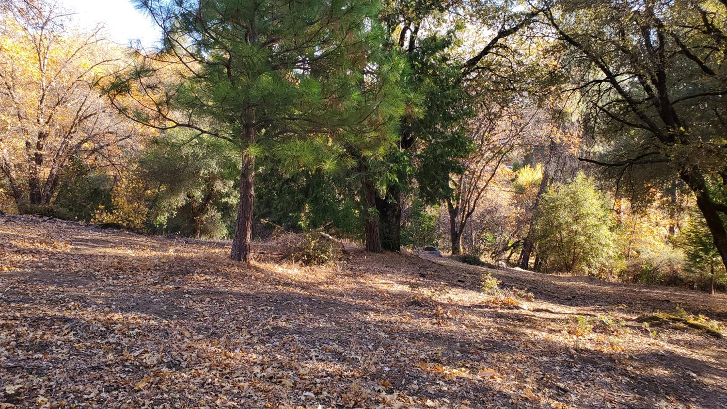 Build your home in the country! This parcel has easy road access, with additional access on the side. Close to shopping. Electric and water to the site. Private and building pad ready to be cut.
