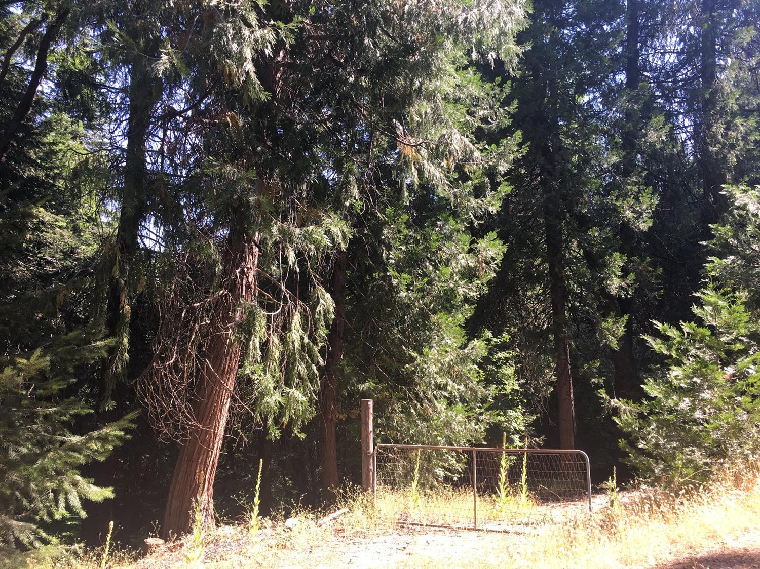 BUILD YOUR DREAM HOME ON THIS BEAUTIFUL 3 ACRES IN CAMINO WITH WATER METER IN AND PAID FOR. SPECTAUCLAR MATURE PINES AND OAKS MAKE THIS A VERY PRIVATE LOT. EASY ACCESS GATE AND FUN TRAIL CUT TO TRAVERSE THE LAND. WONDERFUL LOCATION AMONG EL DORADO COUNTY AGRICULTURE, APPLES, CHRISTMAS TREES AND WINERIES JUST MINUTES TO HIGHWAY 50. ALSO, YOU'RE AN HOUR TO SKIING, AMAZING OUTDOOR ACTIVITIES AND SOUTH LAKE TAHOE. IF YOU'VE BEEN LOOKING FOR A SPECIAL PLACE TO CALL HOME LOOK NO FURTHER!