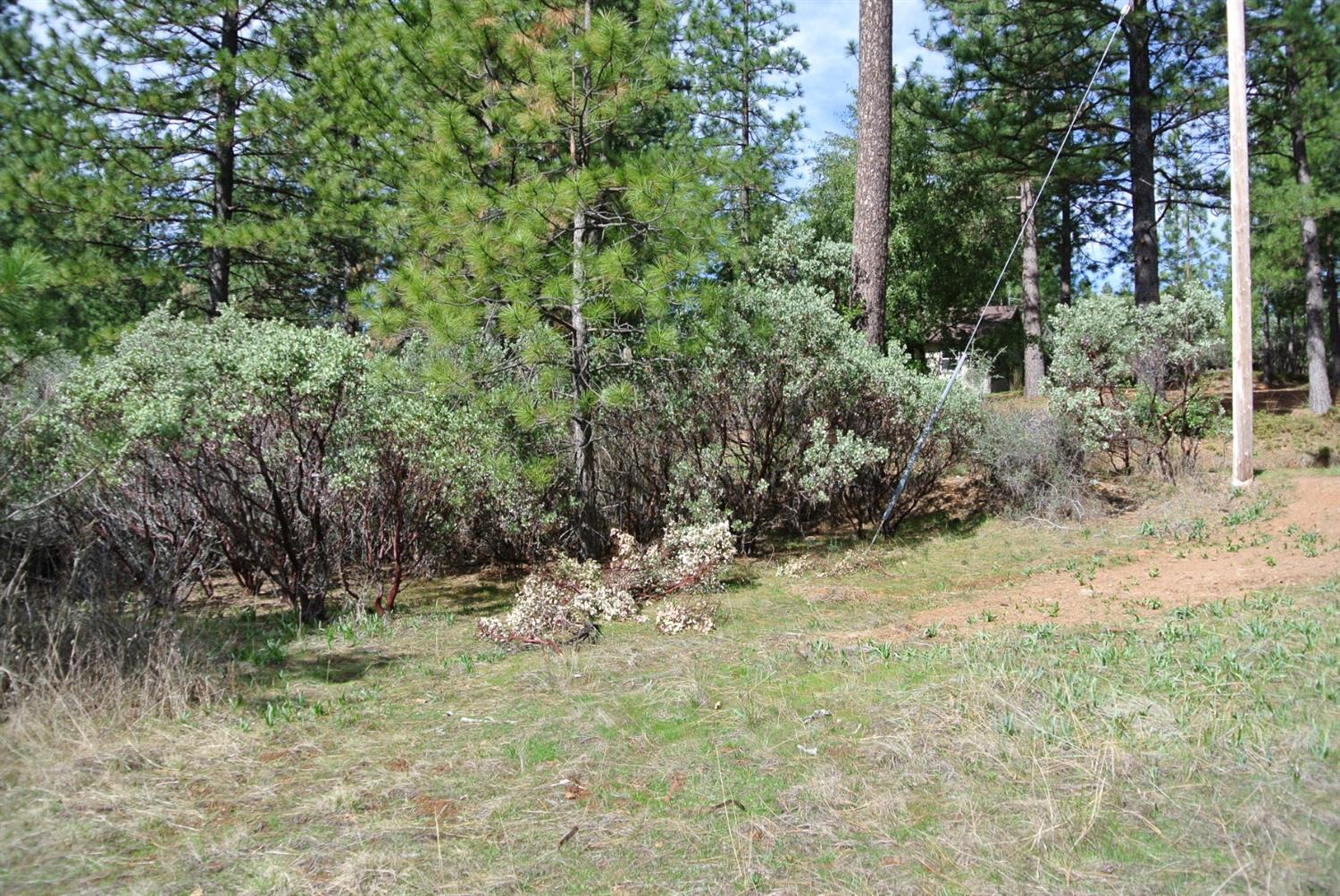 1 acre at $29,900 in Foresthill off Todd Valley Rd.  flag lot so its private. Trees and brush.