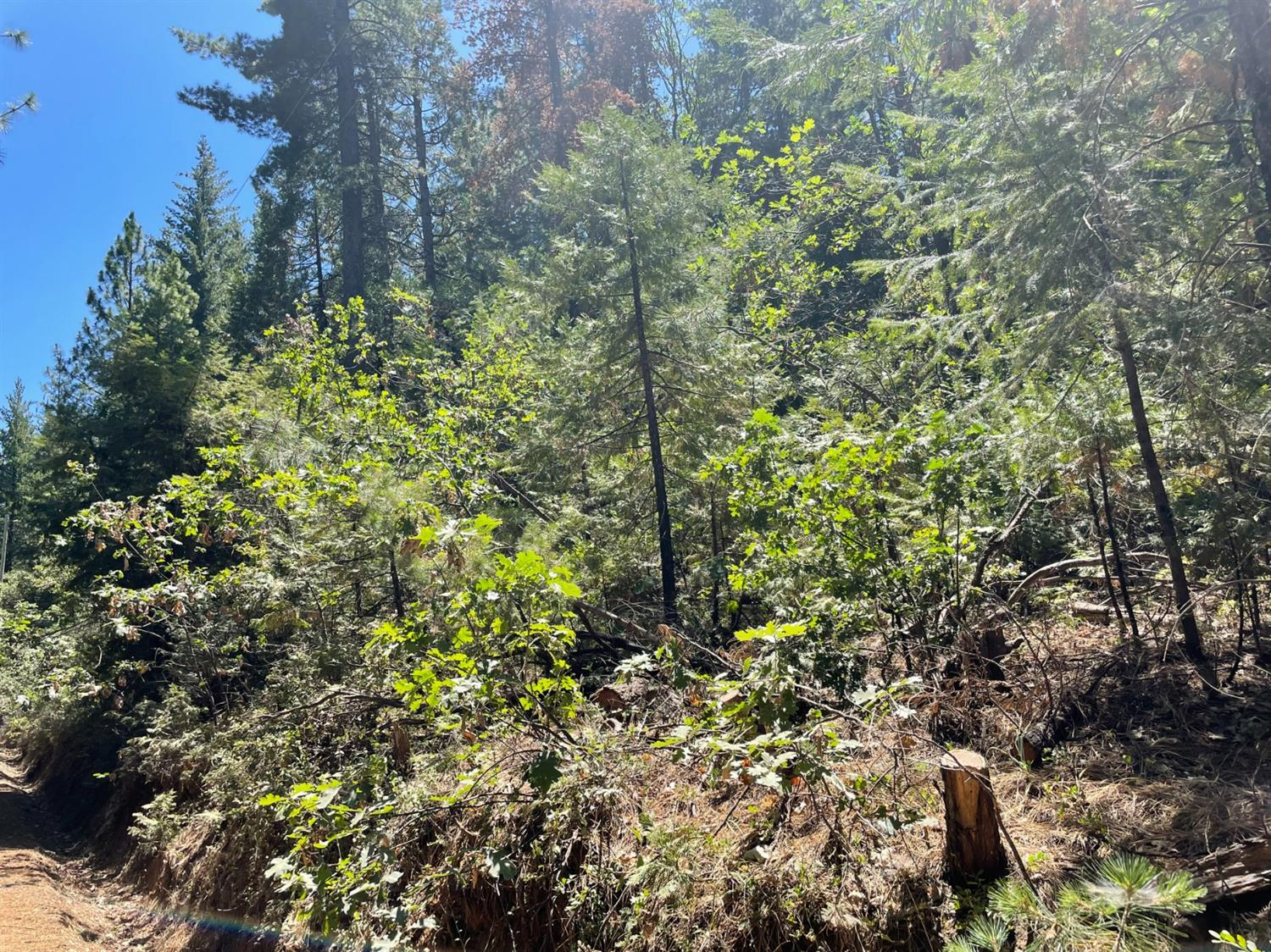 10 acres, clean slate, Backs up to El Dorado National Forest. ATV, hunting, horse back riding, hiking heaven. Quiet place to build a homestead amongst the pines and oaks.